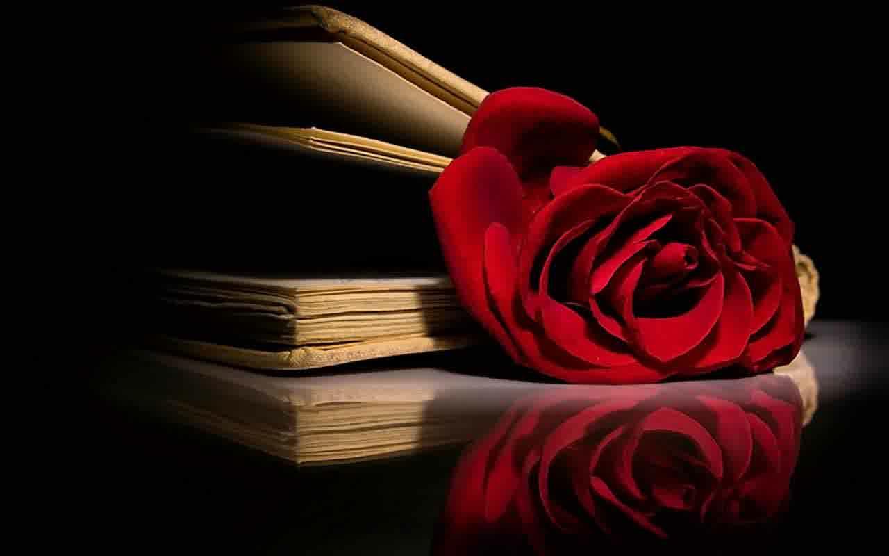 wallpaper bunga mawar