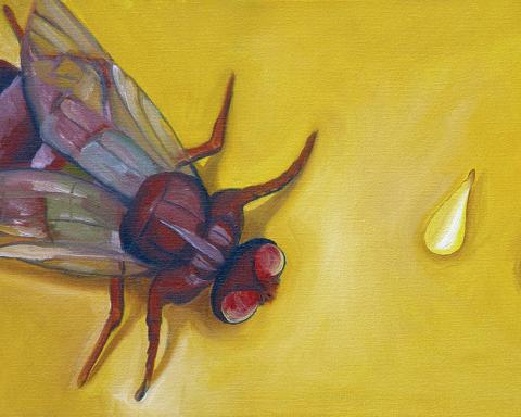 Mereka Berburu Lalat - Cerpen BASABASI.CO oleh Yetti A.KA